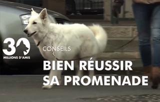reussir promenade avec son chien