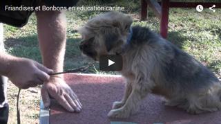 Friandises et bonbons en éducation canine